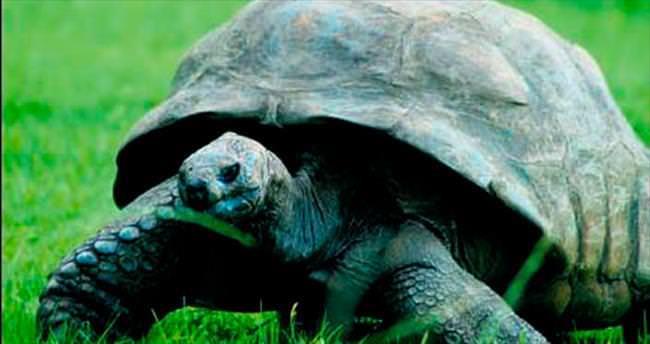 183 yaşındaki kaplumbağayı meyve sebze diyeti kurtardı