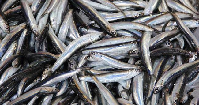 Mutlu olmak ve zayıflamak için balık tüketin