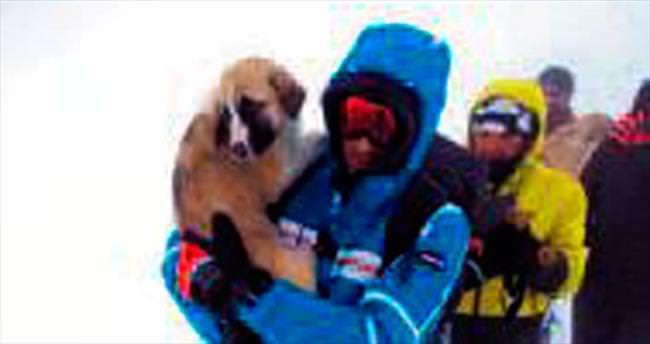 Donmak üzere olan köpekleri kurtardılar
