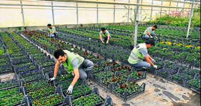 Antalya OSB'den çiçek üretimi