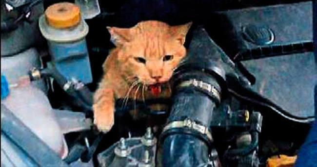 Motorda sıkışan kedi kurtarılamadı
