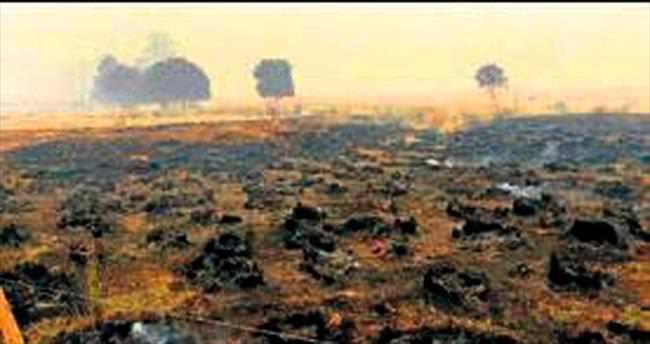 Dünya mirası orman kül oldu