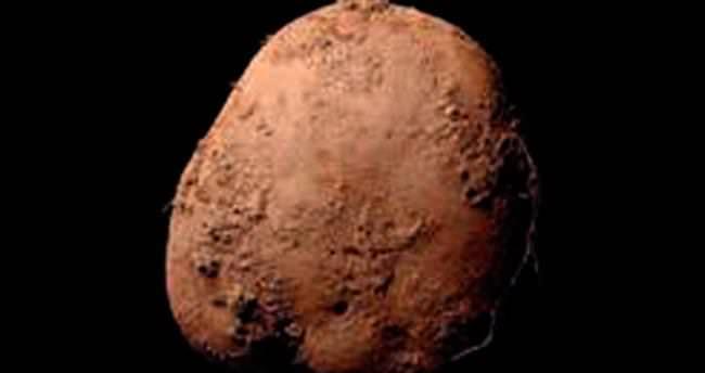 Patates fotoğrafına 1 milyon €
