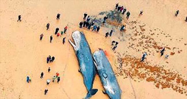 3 ülke, 16 balina ölümü: Sebebi denizaltılar mı?