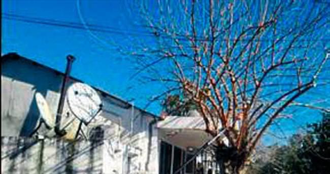 Ceyhan Belediyesi ağaçları buduyor