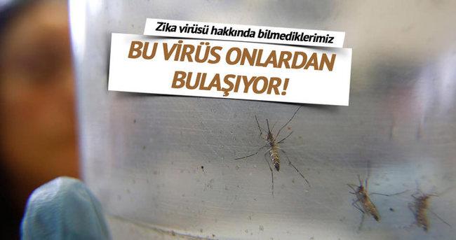 Zika virüsü hakkında bilmediklerimiz!