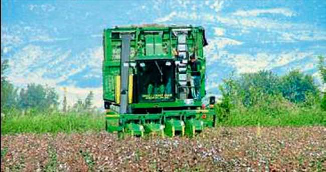 Denizli'de pamuk üreticileri artıyor