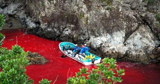Taiji koyu balina katliamıyla renk değiştirdi