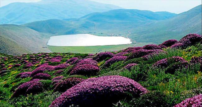 Maraşın dağlarnıda sizin için de açan bir çiçek var