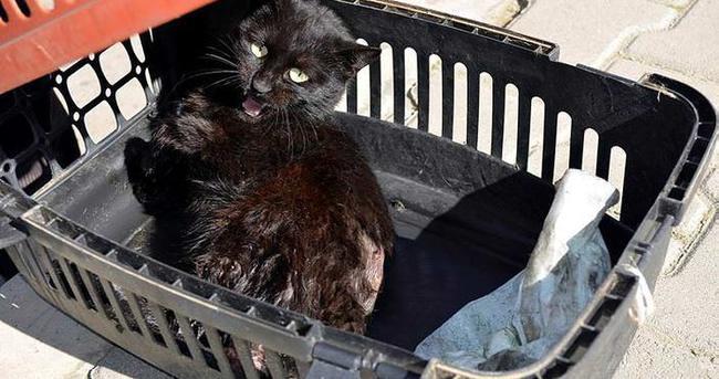 Vicdansızlar yavru kediye tüfekle ateş etti