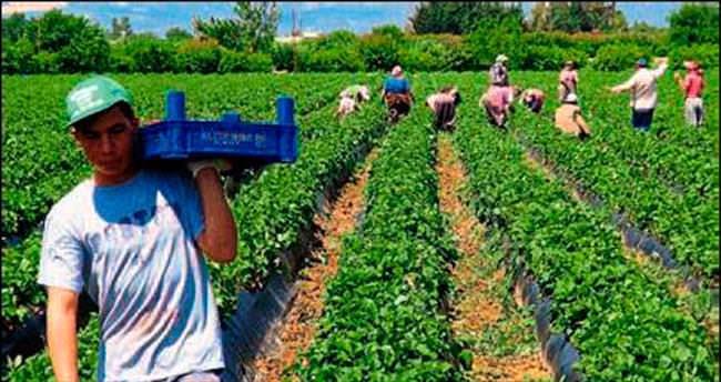 Sıcak hava tarımsal üretime zarar verecek