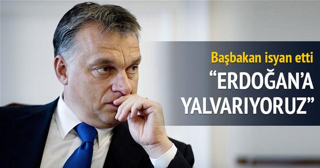 Başbakan Orban: Erdoğan'a yalvarıyoruz