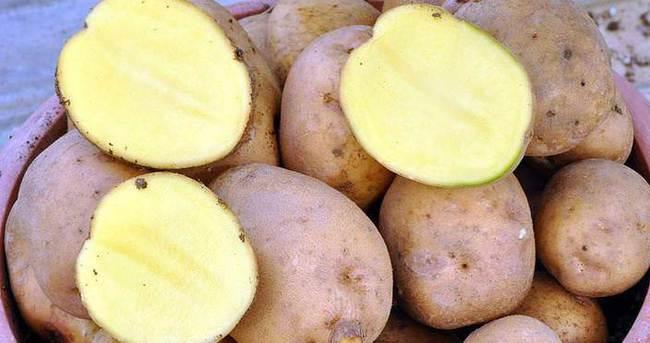 Patatesin fiyatı 35 kuruşa düştü