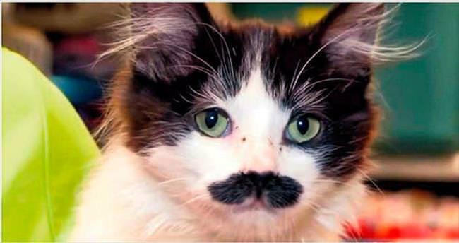 İnternet bir fenomen daha çıkardı: Bıyıklı kedi