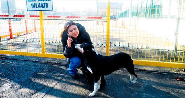 Otomobilin çarpıp kaçtığı sokak köpeğine yardım eli