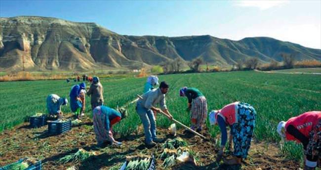 Beypazarı'nda sebze sezonu açıldı