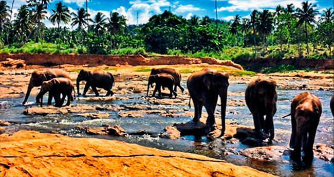 Beklenmedik şeyler ülkesi Sri Lanka