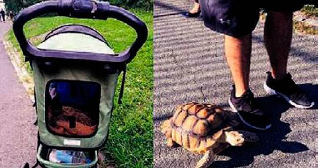 Kaplumbağa Henry'yi gezdirecek eleman arıyor