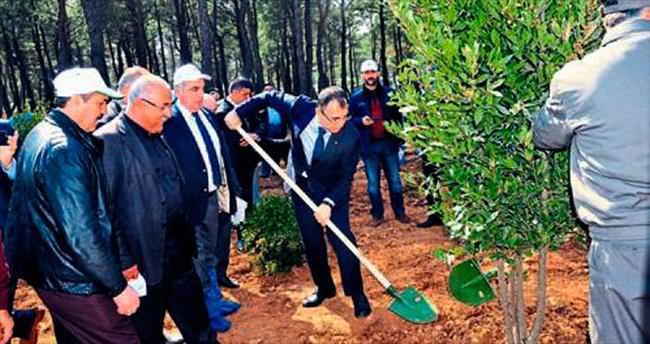 Ormancılık gününde fidanlar toprakla buluştu