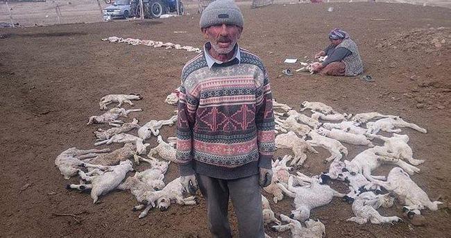 Yanlış iğne 200 kuzuyu telef etti