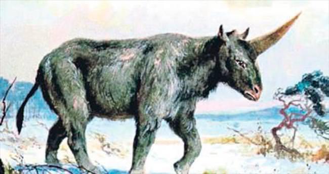 'Tek boynuzlu at' Kazakistan'da bulundu