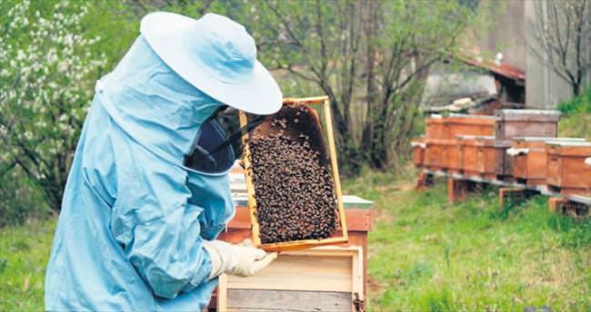 Arılardan yine rekor bekleniyor