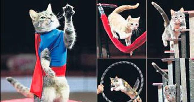 Sokak kedileri akrobat oldu