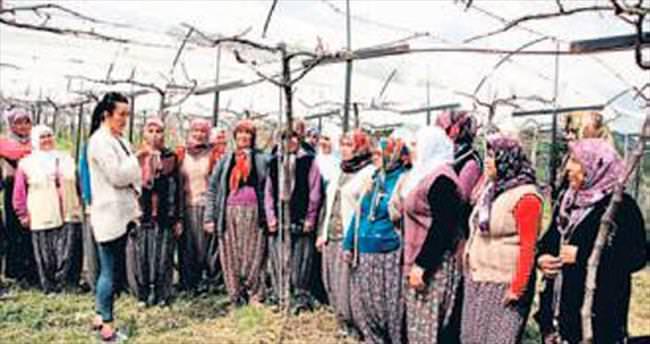 Erdemli'de üzüm ve kültür mantarı yetiştiriciliği kursu