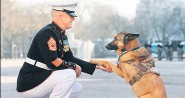 Kahraman köpeğe onur madalyası