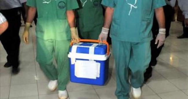 Türler arası organ naklinde ilerleme kaydedildi