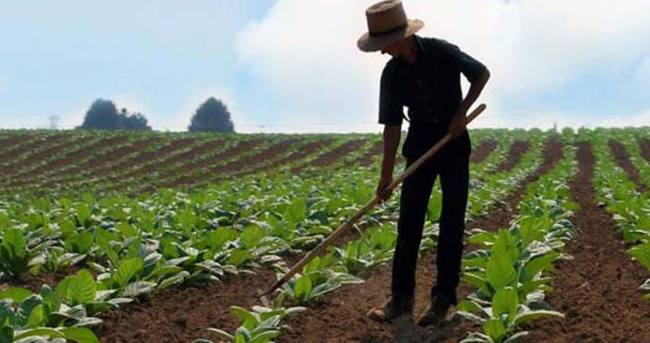 Çiftçiye destek başvuruları başlıyor