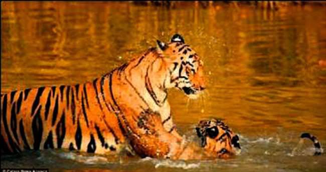 Anne ve yavrunun banyo zamanı