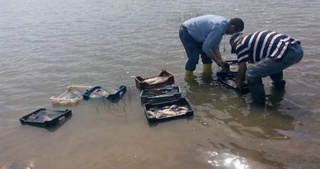 700 kilo kaçak sazan balığına bin 113 lira ceza