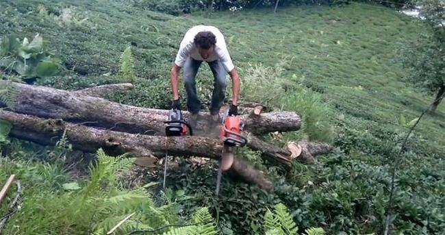 Kestiği ağacın altında kalarak can verdi