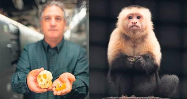 Kuzey Amerika'ya ilk maymunlar salla gelmiş