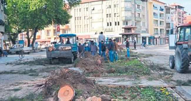 Kula Belediyesi 2. kez ağaç kesti
