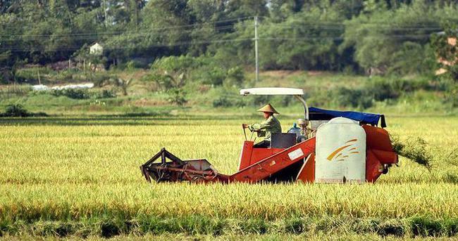Çin'de 8 bin yıllık pirinç tarlası bulundu