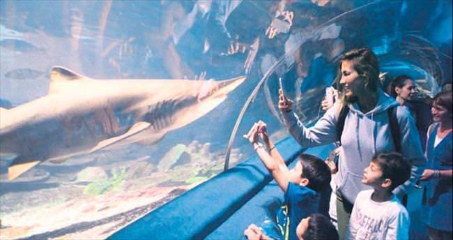 Uzay ve Kuzey'le köpekbalıklarını inceledi