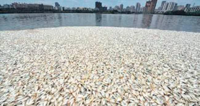 35 ton ölü balık nereden çıktı?
