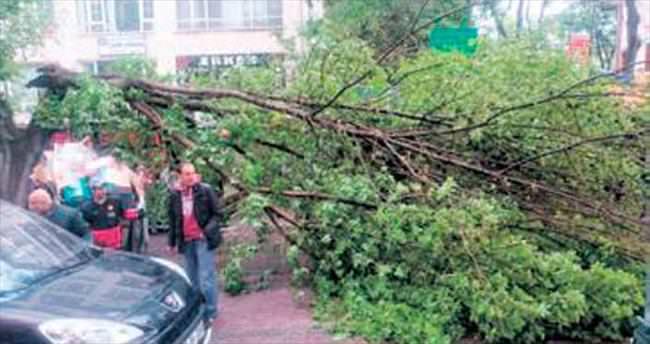 Şiddetli yağış ağacı devirdi