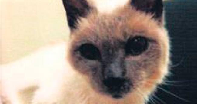 En yaşlı kedi 30'unda öldü