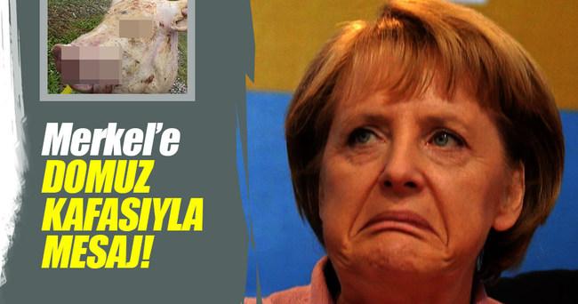 Merkel'in ofisinin önüne domuz kafası bırakıldı