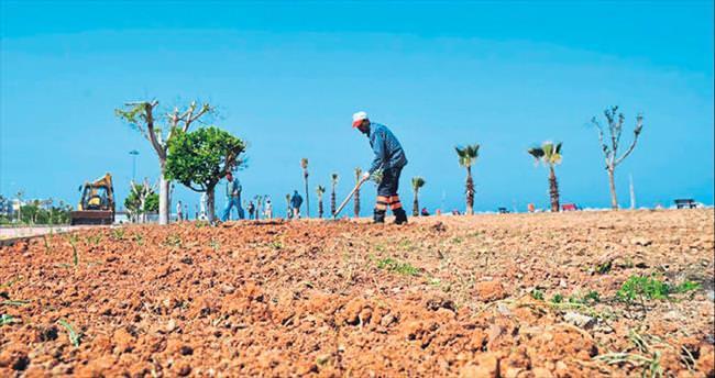 İskenderun Belediyesi sahilde çimleme yapıyor