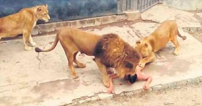 Kendini aslanlara ikram etti