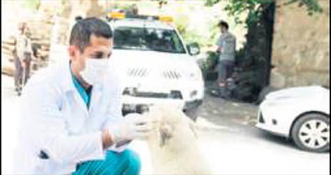 Mamak'ta kuduz aşısı kampanyası