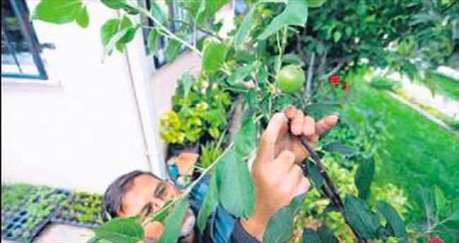 Tek bir ağaçtan 7 farklı meyve aldı