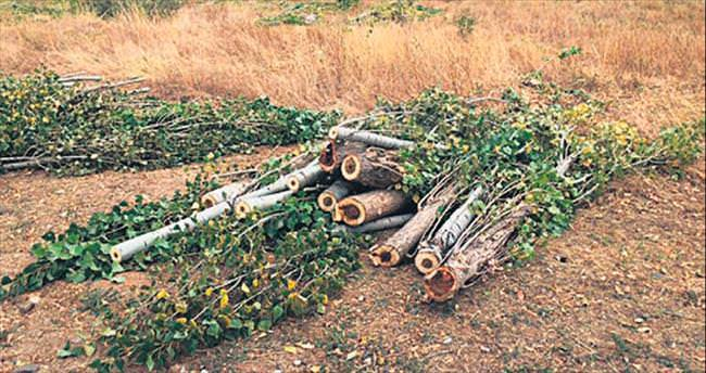 Bu ağaçlar kesilirken siz neredeydiniz?