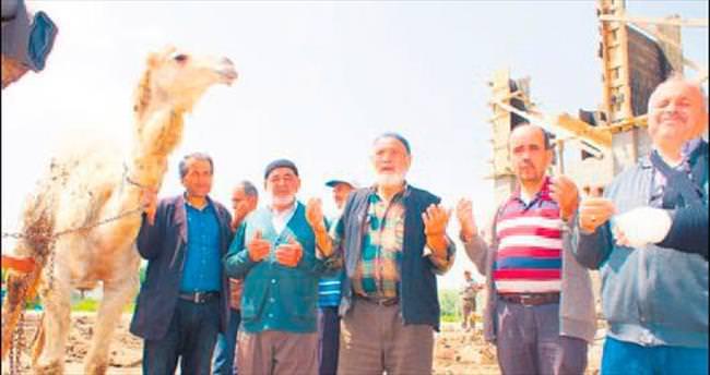 Kurbanlık deve kesimden kaçtı