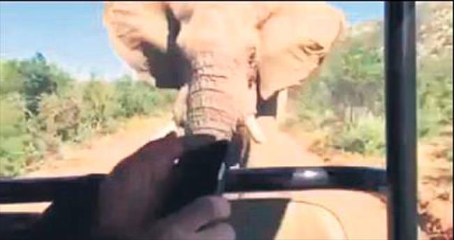Terminatör'ü safari turunda fil kovaladı