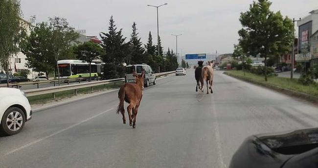 2 at ve 1 eşek trafiği alt üst etti
